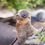 Las Islas Galapagos: For the Love of Sea Lions