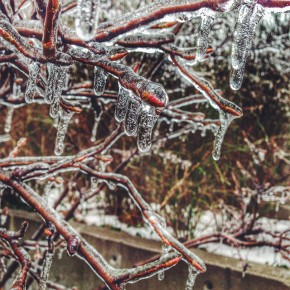 The Toronto Ice Storm in Photos