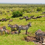 Kenya: The Maasai Mara and Spectacle of the Great Migration