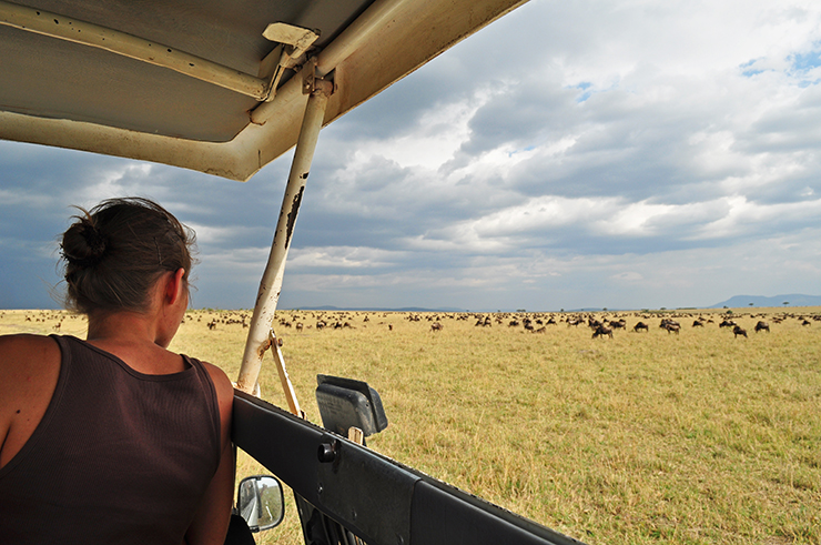 viewing the wildebeest migration in kenya from a safari vehicle