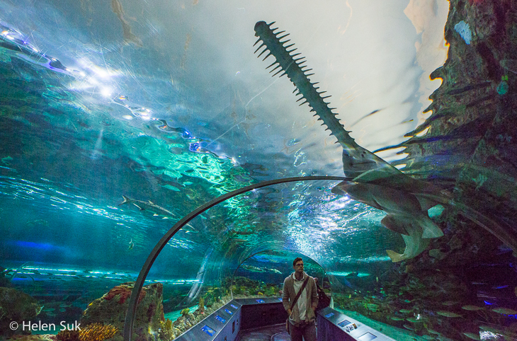 man walking through tunnel at ripleys aquarium canada