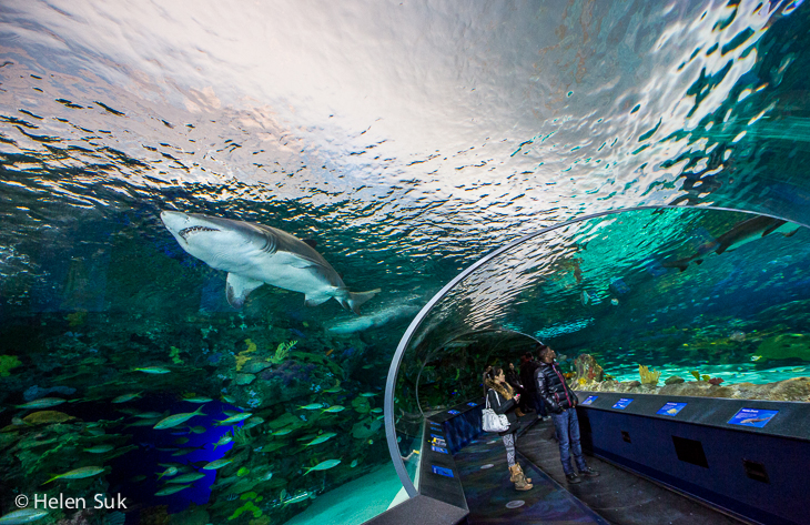 shark swims over visitors at ripley's aquarium of canada