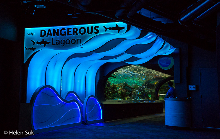 dangerous lagoon at ripley's aquarium of canada in toronto