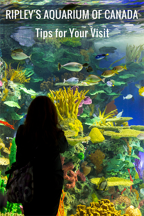 ripleys aquarium canada photography tips