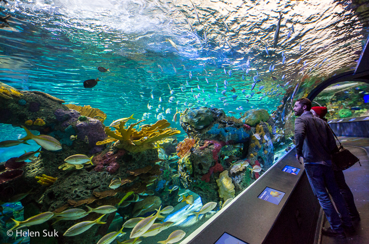 ripley's aquarium toronto photography tips