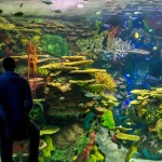 Ripley's Aquarium of Canada: Tips for Your Visit