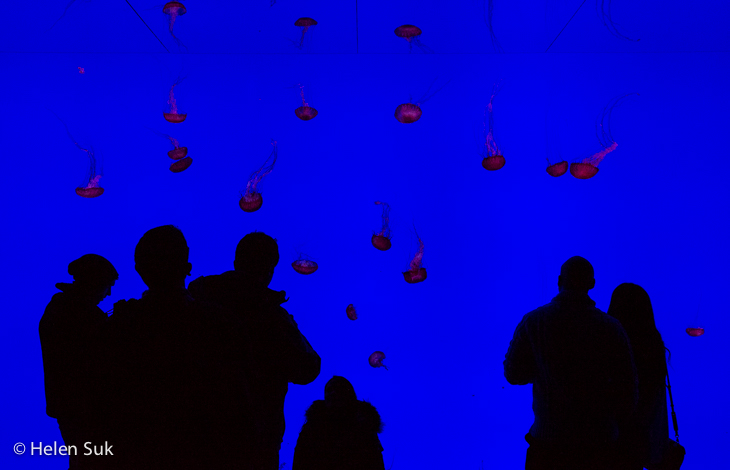 silhouettes at toronto ripley's aquarium