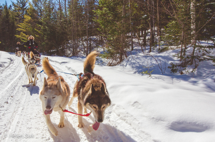 haliburton dog sledding