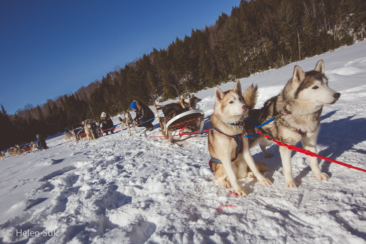 winterdance dog sledding