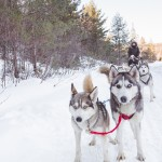 Winterdance Dogsled Tours in Haliburton, Ontario