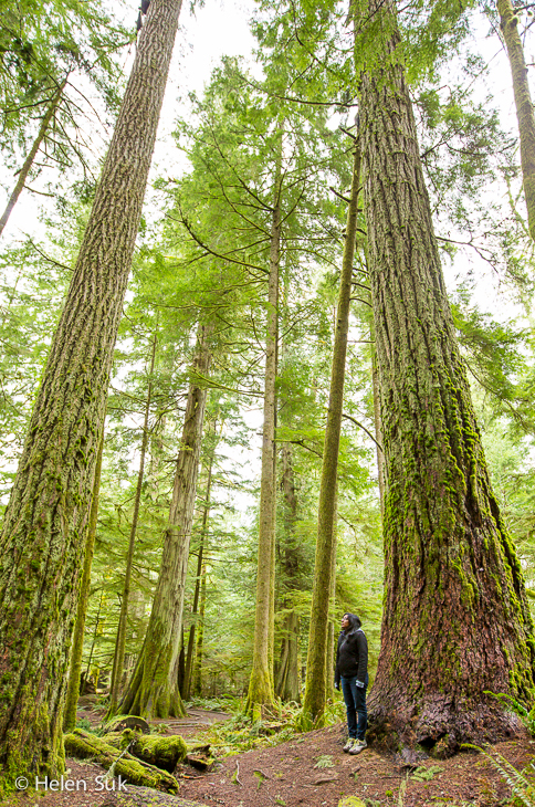 cathedral grove, vancouver island, canada road trip