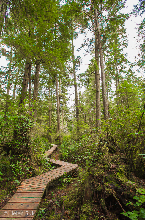 schooner cove, tofino hiking, best hikes in bc, tofino hiking, hiking in tofino, tofino trails, hiking bc, rainforest trails tofino