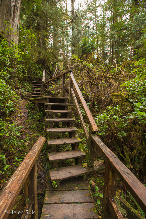 schooner cove, tofino hiking trails, best hikes in bc, tofino hiking, hiking in tofino, tofino trails, hiking bc, rainforest trails tofino