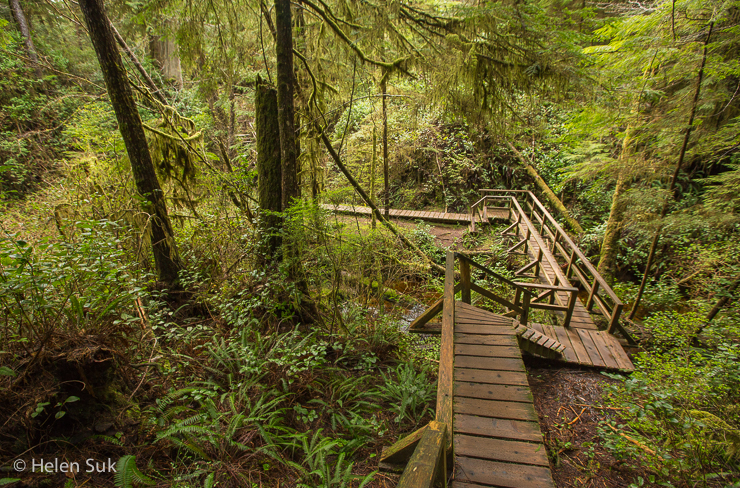schooner cove, best hikes in bc, tofino hiking, hiking in tofino, tofino trails, hiking bc, rainforest trails tofino