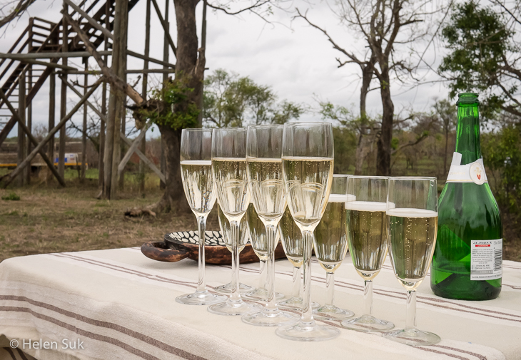sparkling wine in the middle of the south african bush