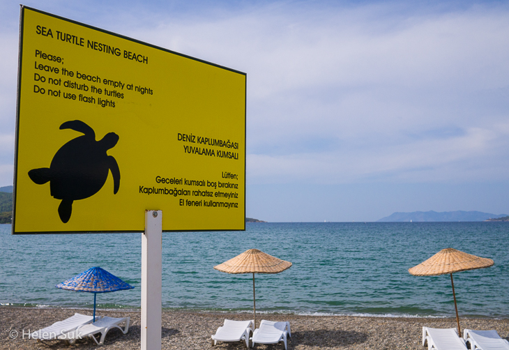calis beach turtle sign