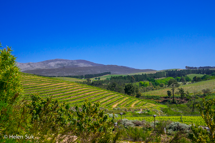 the vineyards at creation wines