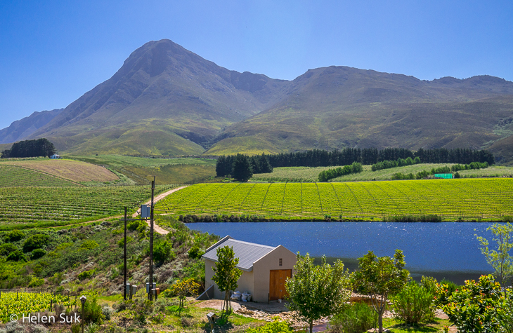 view of green rolling hills at creation winery on the hermanus wine route