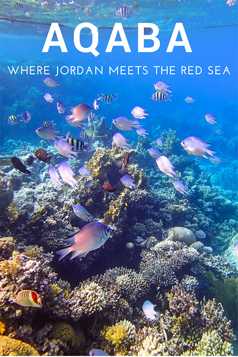 aqaba jordan, red sea, snorkelling
