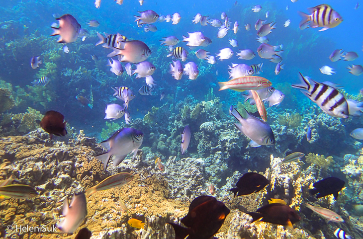 aqaba snorkeling, jordan, red sea