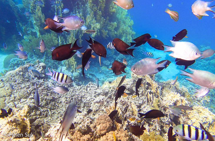 red sea, aqaba, jordan, tropical fish