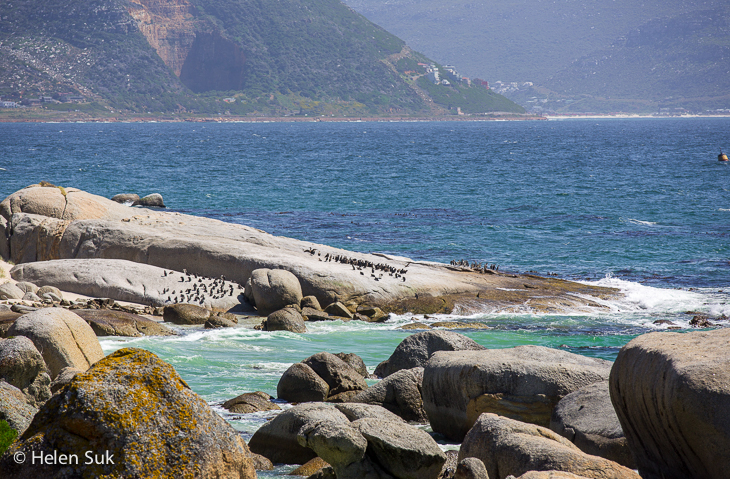 penguin colony on large rocks at boulders beach south africa