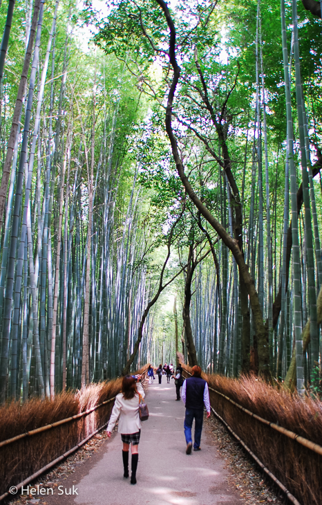 bamboo grove at tenryu-ji in kyoto japan