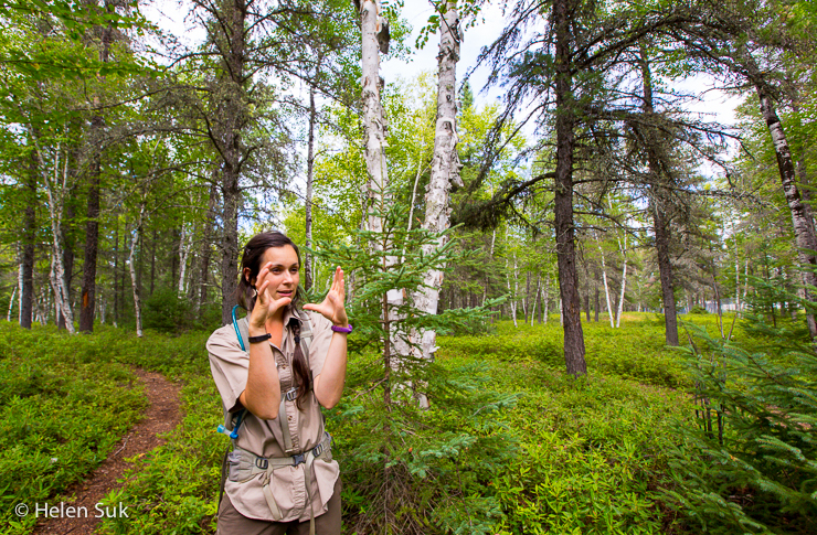 nature guide explains the flora and fauna in the nature trail park at the zoo st felicien