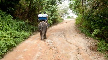 The Ethics of Riding an Elephant in Thailand