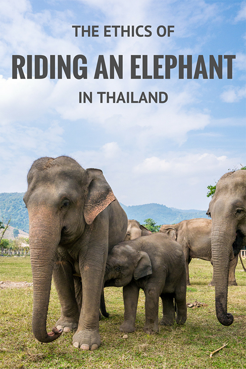 the ethics of riding an elephant in asia