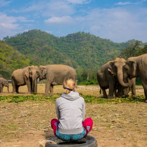 Elephant Nature Park: A More Ethical Alternative to Elephant Trekking