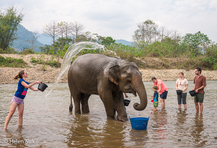 Elephant Nature Park: A More Ethical Alternative to ...