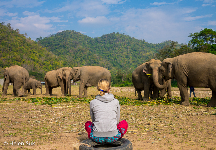 woman sits in front of a herd of elephants at elephant nature park