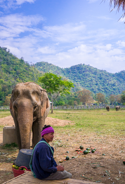 a mahout sits next to an elephant at an elephant rescue center in chiang mai thailand
