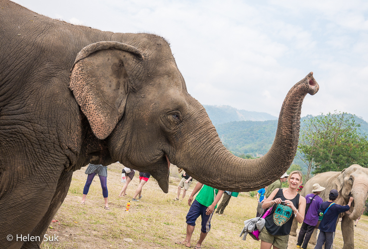 tourists surround an elephant at an elephant sanctuary in thailand