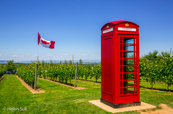 bright red phone booth and canadian flag in the vineyards at luckett vineyards