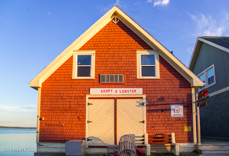 building to adopt a lobster in pictou
