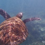 Galapagos Islands: The Final Days (and Sharks!)